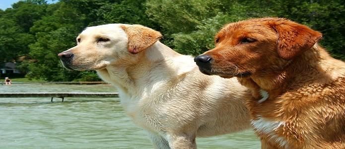 adopción perros y gatos