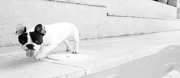 artrosis perros gatos