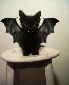 Gatito Vampiro