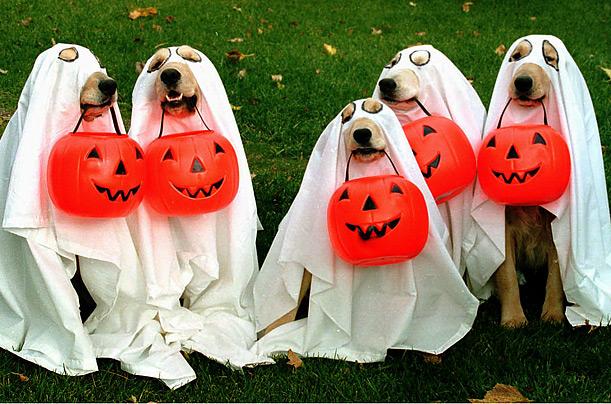 Disfraces Halloween perros gatos