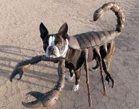 Perro escorpión