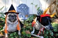 Perros del cementerio
