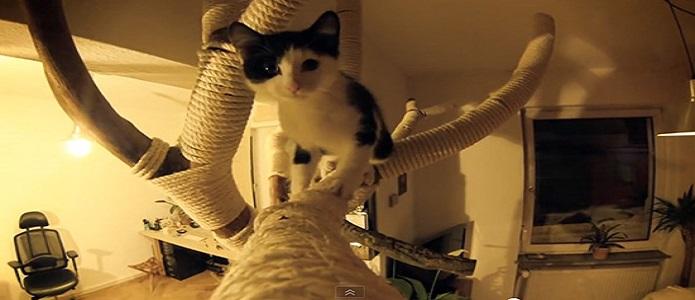 DIY: Rascador gatos