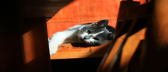 gatos tristes en otoño
