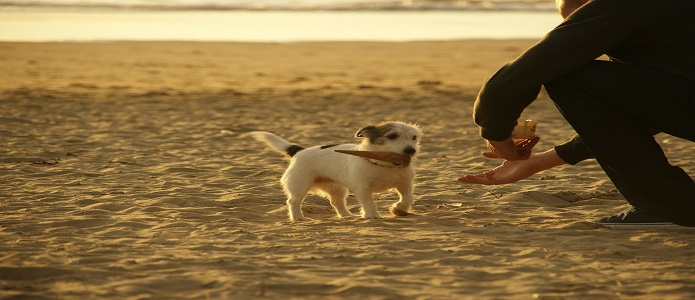 Acercarse a un perro desconocido