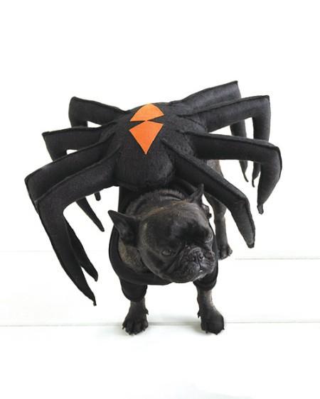 DIY: disfraz araña para perros