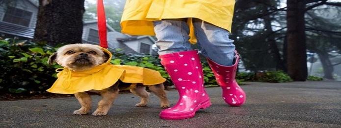 abrigos mascotas