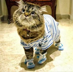 pijama gatos