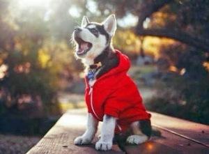 Sudadera perros
