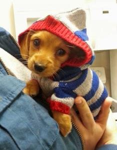 ropa invierno perros