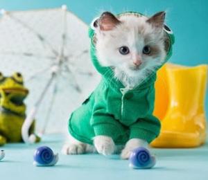 sudadera gatos