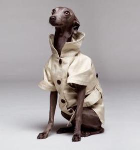 gabardina perro