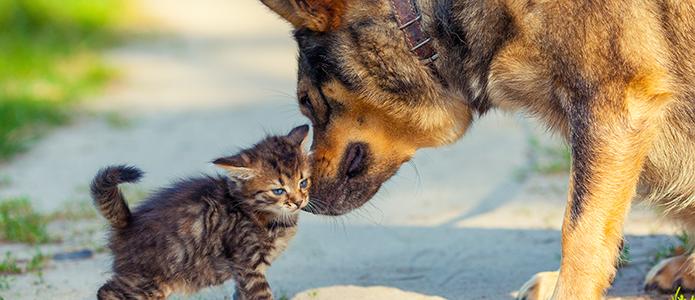 tener perro y gato