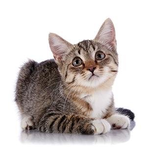 cómo viajar con un gato