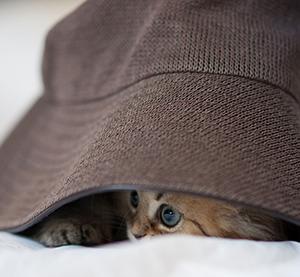 miedo a los petardos gatos