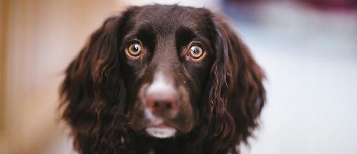 miedo a los petardos perros