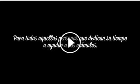 video_goodogs_promoanimal