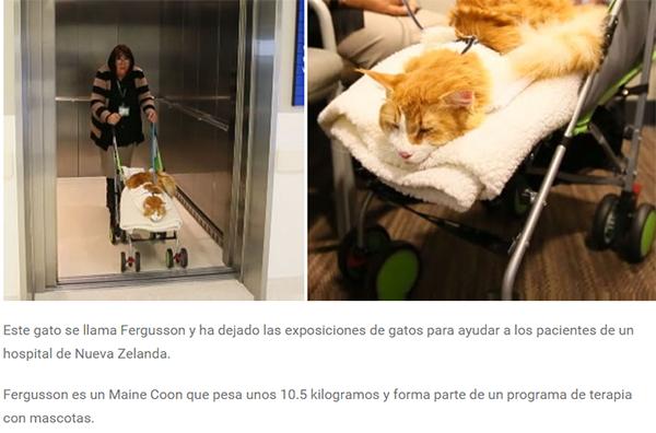 gato_fergusson