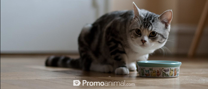 nutrientes_gato